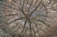 木头的接近的横剖面 库存图片