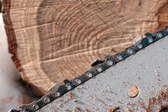 木头的末端与镇压和benzopilny电路宏观摄影,特写镜头的锯 图库摄影