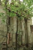 木头的被放弃的被破坏的长满的教会, Drezgalovo,利佩茨克州地区 库存图片