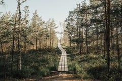 木头的路通过沼泽上在晚上在夏天 Kemeru拉脱维亚 图库摄影