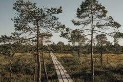 木头的路通过沼泽上在晚上在夏天 Kemeru拉脱维亚 库存照片