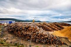 木头的Cutted树干在北部欧洲 免版税图库摄影