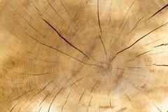 木头裁减背景 免版税库存照片
