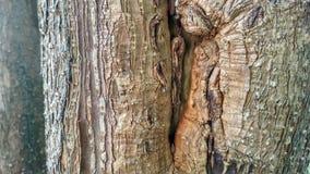 木头 库存照片