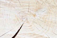 木年轮背景纹理、平的区域与圈子和一深镇压,棕色颜色 图库摄影