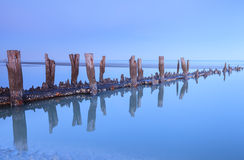 木打桩愚蠢海滩南卡罗来纳蓝色小时 免版税库存图片