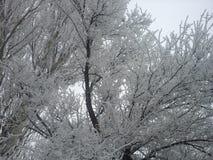 木报道的神仙的森林房子雪传说的冬天 免版税库存图片