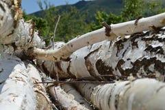 木捆绑 库存照片