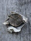 木插座 免版税库存图片