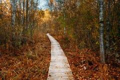 木搭乘道路方式路在沼泽沼泽附近的秋天森林里 免版税图库摄影