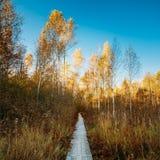 木搭乘道路方式路在秋天森林里 免版税图库摄影