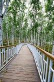 木支架在桦树森林里 免版税库存照片