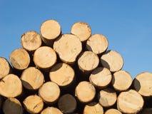 木新鲜的树干 库存照片