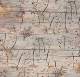 木无缝的纹理 免版税库存图片