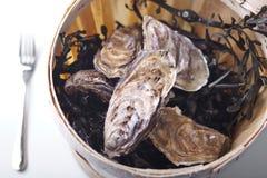 木时段的牡蛎 库存照片
