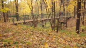 木曲拱桥梁,落后机架焦点,在焦点外面的夫妇 股票录像