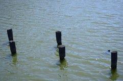 木杆从池塘推出 图库摄影