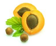 木杏子的螺母 库存图片