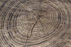 木材产业自然抽象背景:灰色被风化的被锯的木头毛面  库存图片