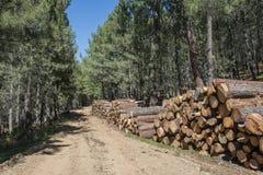 木材产业 图库摄影