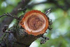 木材产业 免版税库存图片