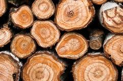 木材关闭的横断面为 库存图片