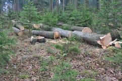 木材准备好运输,南波希米亚 免版税库存照片