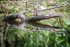 木材反射 库存图片