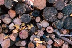 木材和木柴从森林 库存图片