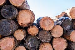 木材和木柴从森林 免版税库存照片