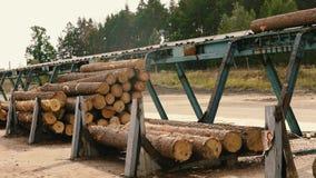 木材的生产从木头的 木材加工 机器记录 注册锯木厂沿传送带移动 影视素材