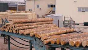 木材的生产从木头的 木材加工 机器记录 注册锯木厂沿传送带移动 股票视频