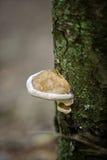 木材真菌 库存图片