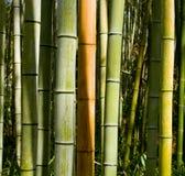 木材竹子 免版税库存图片