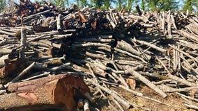 木材被堆积相当粗砺在击倒以后 库存图片