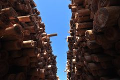 木材-蓝桉,玉树 库存图片
