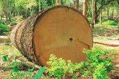 木材 免版税库存图片