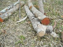 木材 库存照片