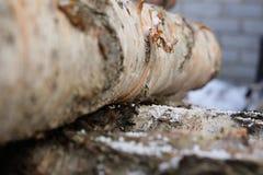 木材 库存图片