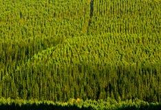 木材Plantaion 图库摄影