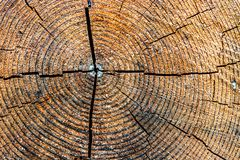木板墙壁纹理样式 库存图片