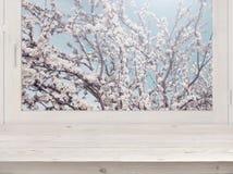 木板条和窗口与被弄脏的开花树在阳光下 库存图片