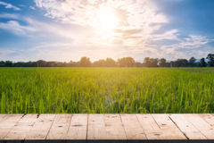 木板桌前面和被弄脏的背景米领域sunli 图库摄影