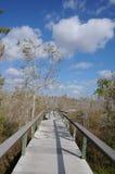 木板走道在柏树丛,沼泽地N'tl Pk里 库存图片