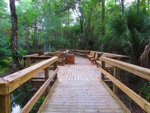 木板走道在森林 免版税库存图片