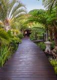 木板走道在热带公园 免版税库存图片