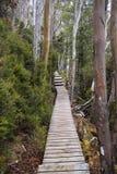 木板走道森林 库存照片
