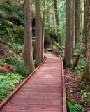 木板走道森林 库存图片