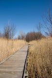 木板走道沼泽地 库存图片