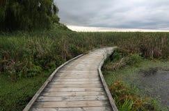 木板走道沼泽 库存照片
